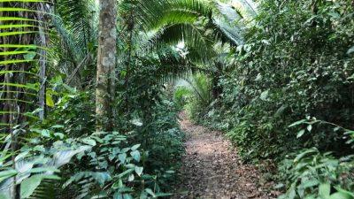 亞馬遜死籐水之旅分享